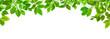 Grüne Blätter vor weißem Hintergrund