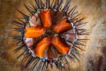 Fresh Sea Urchins