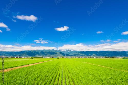 Foto auf Gartenposter Lime grun 信州 安曇野の田園風景