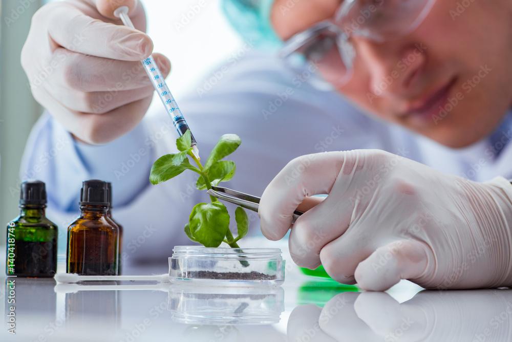 Fototapeta Biotechnology scientist working in the lab