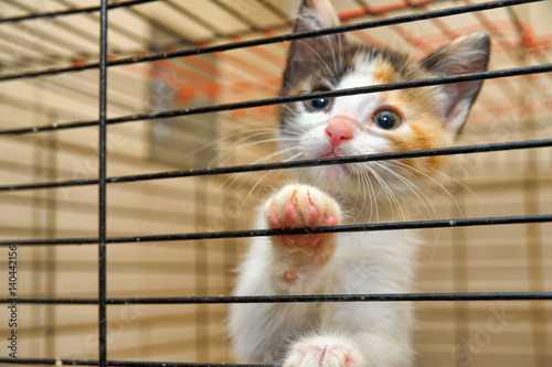 Fotografie, Obraz  Cute Kitty In Cage