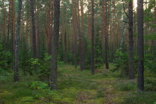 """Park Krajobrazowy """"Lasy Janows..."""