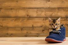 Kitten Sitting In A Blue Shoe ...