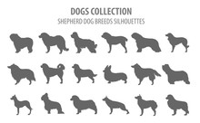 Shepherd Dog Breeds, Sheepdogs Collection Isolated On White. Flat Style