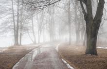 Road In Dark Foggy Forest. Lon...