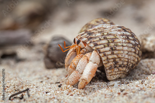 Close-up hermit crab on white sand at the island La Digue, Seychelles