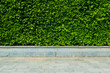 Vertical garden green leaves wall or tree fence behide the road for background.
