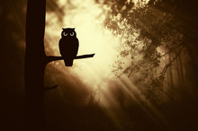 Owl On Tree Branch In Fantasy ...