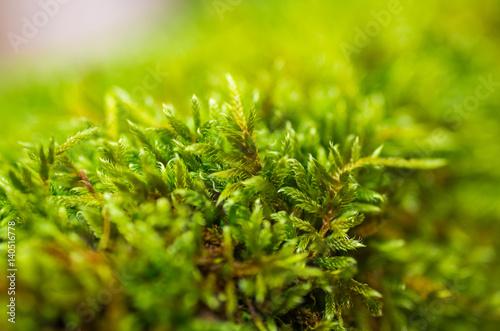 Fényképezés  Mousse végétale