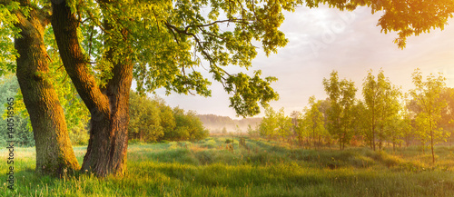 Spoed Foto op Canvas Bomen Colorful spring sunrise