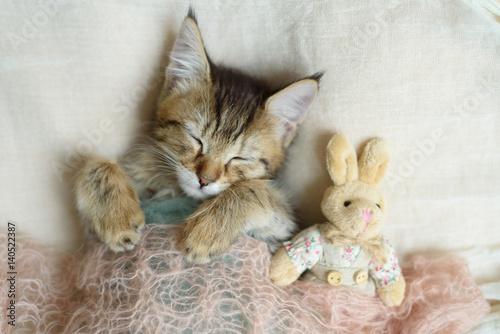 Sleeping kitten wrapped in a blanket Poster