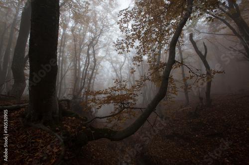 Aluminium Prints Dark grey Crimea forest