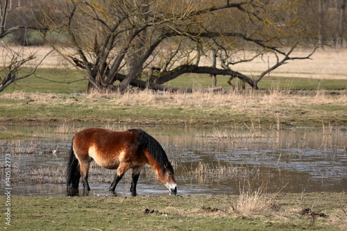 Fotografía  Pferd auf der Weide