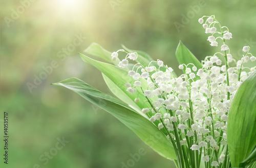 Deurstickers Lelietje van dalen Flower lily of the valley, closeup, spring