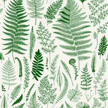 Seamless Pattern. Ferns. Vinta...