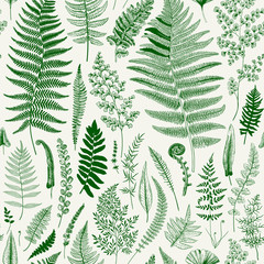 Panel Szklany Eko Seamless pattern. Ferns. Vintage vector botanical illustration. Green