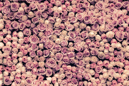 Ingelijste posters Roses flowers wall background with amazing roses