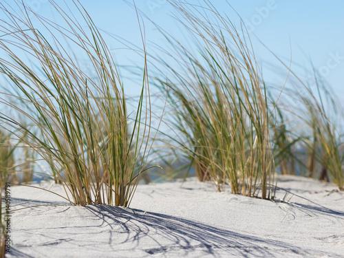 Spoed Foto op Canvas Noordzee Strand - Ostsee - Strandhafer im Gegenlicht