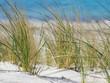 Ostseeküste - Strandhafer - Strandurlaub - Entspannung