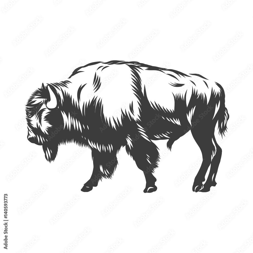 Fototapeta American buffalo inked vector