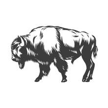 American Buffalo Inked Vector