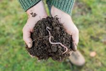 Earthworm On Heap Of Soil On Hands