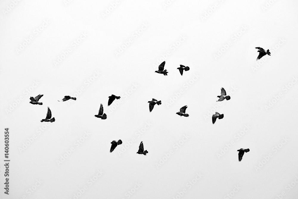 Photo  Flight of birds in the wild. Silhouette. Free. Freedom