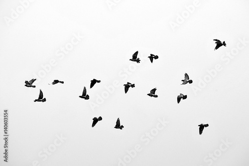 Poster Vogel Flight of birds in the wild. Silhouette. Free. Freedom