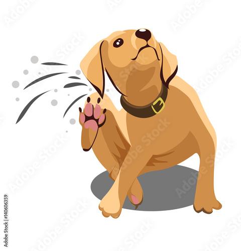 Vászonkép Dog dander