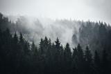 Fog in Norwegian Forest