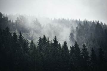 Fog in Norwegian Forest