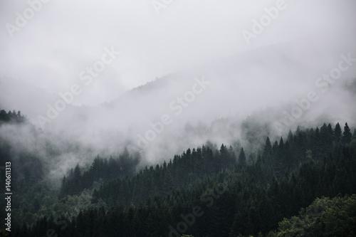 Plakat Mgła w norweskim lesie