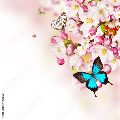 Tuinposter Cherry blossoms with butterflies over blurred nature background