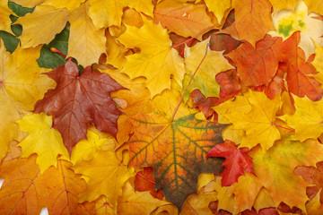 Naklejka na ściany i meble Autumn leaves after rain background