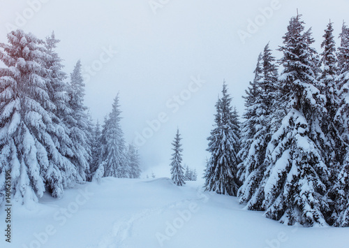 Foto auf AluDibond Rosa hell Mysterious winter landscape majestic mountains in . Magica