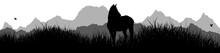 Panorama | Pferd