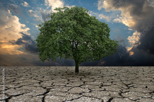 The Concept Of Climate Has Changed Half Alive And Half Dead Tree