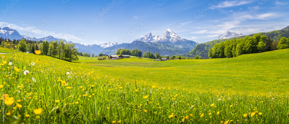Fototapety, obrazy: Idyllic landscape in the Alps with blooming meadows in summer