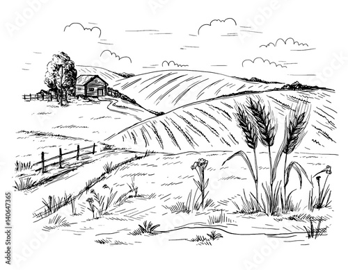 Fotobehang Wit Rural landscape field wheat in graphical style. Hand drawn and converted to vector Illustration.