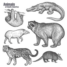 Animals Of South America Set.