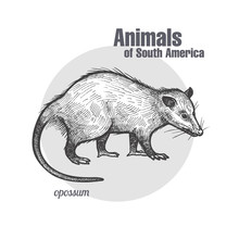Animals Of South America Oposs...