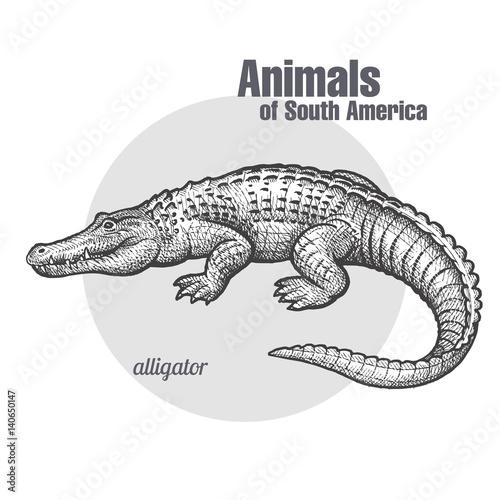 Animals of South America Caiman. Wallpaper Mural