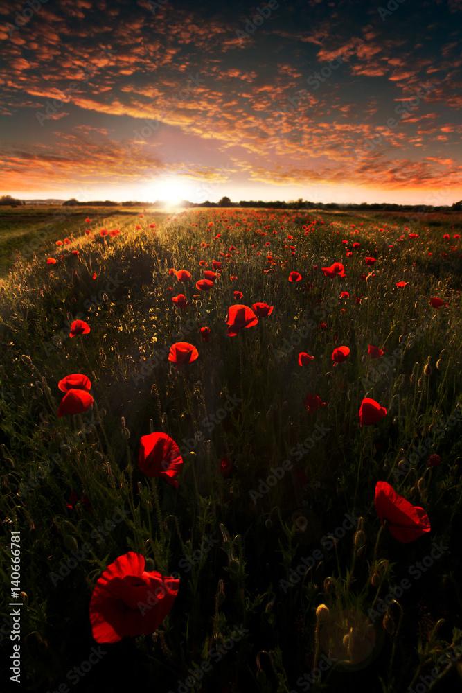 Fototapeta Beautiful sunset on the poppy field. Summer landscape. - obraz na płótnie