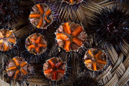 Fresh sea urchins