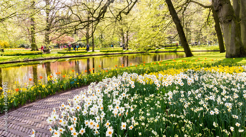 Recess Fitting Narcissus Daffodils in Dutch public Spring flower Garden Keukenhof Lisse, Zuid Holland, NLD