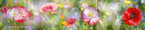 Foto op Canvas Klaprozen summer meadow with red poppy