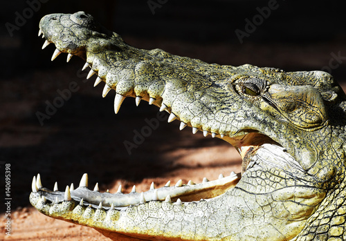Tuinposter Krokodil Profile of a crocodile taking a sunbath