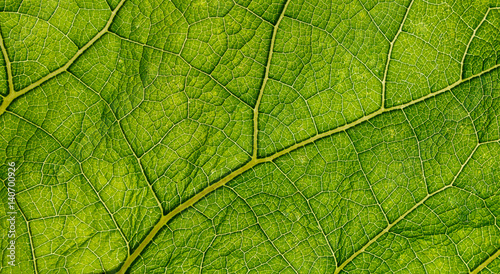 Fresh green burdock leaf closeup texture background #140700926