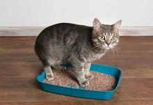 Cute Cat In Plastic Litter Box...
