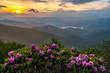 Catawba Rhododendron and sunset, Blue Ridge Parkway, North Carolina